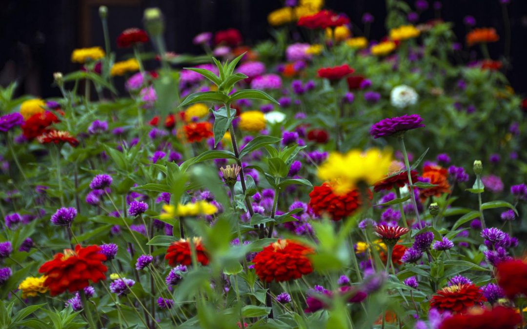 Color Your World With Annuals